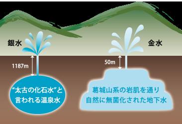 健康にいい水は 体の中で機能する水
